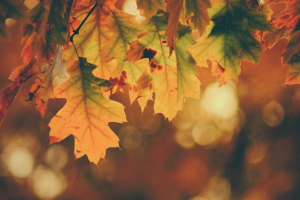 GDPR article with autumn leaves